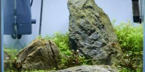 ADA Manten - Flowgrow Aquascape/Aquarien-Datenbank