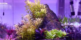 ADA Manten - Flowgrow Aquascape/Aquarien-Datenbank