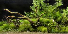 AJIV - Flowgrow Aquascape/Aquarien-Datenbank