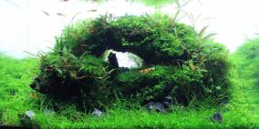Alice in wonderland - Flowgrow Aquascape/Aquarien-Datenbank