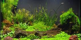 Allerlei Kleinbleibendes - Flowgrow Aquascape/Aquarien-Datenbank