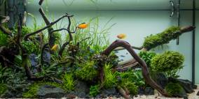 Am Waldrand - Flowgrow Aquascape/Aquarien-Datenbank