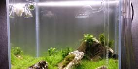Ancient World - Flowgrow Aquascape/Aquarien-Datenbank