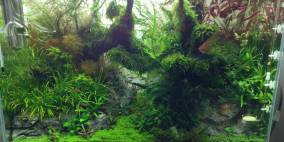 And the forrest began to sing - Flowgrow Aquascape/Aquarien-Datenbank