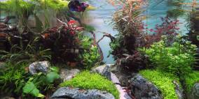 Angkor Wat - Flowgrow Aquascape/Aquarien-Datenbank