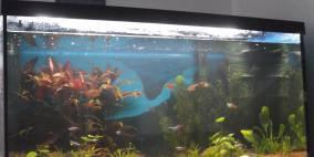 Aquael Leddy 80      105L - Flowgrow Aquascape/Aquarien-Datenbank