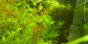 Asien-Regenwaldbecken - Flowgrow Aquascape/Aquarien-Datenbank