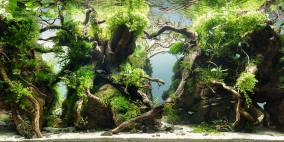 Back to the Roots - Flowgrow Aquascape/Aquarien-Datenbank