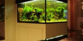 bathtube - Flowgrow Aquascape/Aquarien-Datenbank