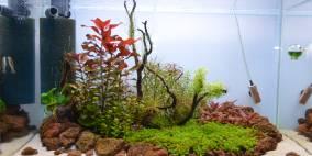 Becken 60 - Flowgrow Aquascape/Aquarien-Datenbank