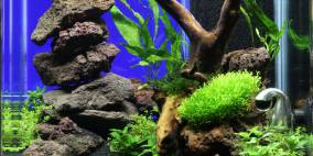 Bee Tank - Flowgrow Aquascape/Aquarien-Datenbank