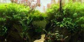 Beside Still Waters - Flowgrow Aquascape/Aquarien-Datenbank