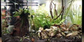 Beta splendid - Flowgrow Aquascape/Aquarien-Datenbank