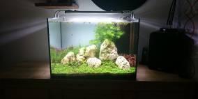Blickfang - Flowgrow Aquascape/Aquarien-Datenbank