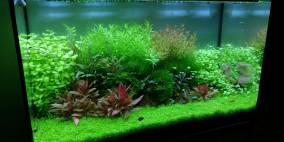 Bloody Mary Scape - Flowgrow Aquascape/Aquarien-Datenbank