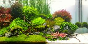 Bommerholz - Flowgrow Aquascape/Aquarien-Datenbank