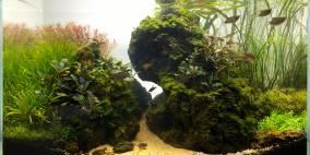 "Borneo ""Selamat Datang"" - Flowgrow Aquascape/Aquarien-Datenbank"