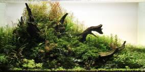 Botanicula - Flowgrow Aquascape/Aquarien-Datenbank