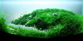 Brandung - Flowgrow Aquascape/Aquarien-Datenbank