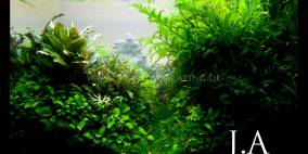 Breathing - Flowgrow Aquascape/Aquarien-Datenbank