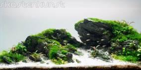 Broken Scenery - Flowgrow Aquascape/Aquarien-Datenbank