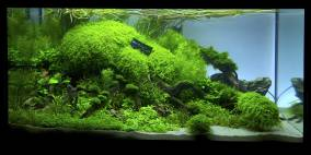 Closer - Flowgrow Aquascape/Aquarien-Datenbank