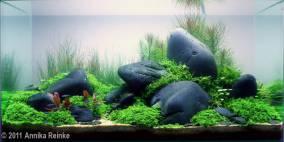 Color And The Shape - Flowgrow Aquascape/Aquarien-Datenbank