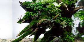 Crowded Wood - Flowgrow Aquascape/Aquarien-Datenbank