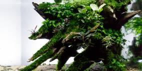 Crowded Wood - Flowgrow Aquascape/Aquarien-Datenbank