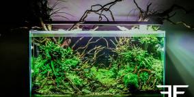 Ctulluh - Flowgrow Aquascape/Aquarien-Datenbank