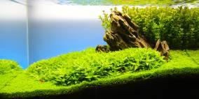 Cuba Mountain - Flowgrow Aquascape/Aquarien-Datenbank