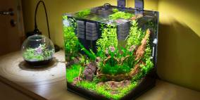 CuBee 30 - Flowgrow Aquascape/Aquarien-Datenbank