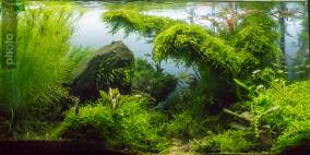 Da unten am Bach - Flowgrow Aquascape/Aquarien-Datenbank