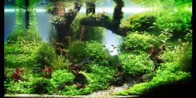 De Woy - Flowgrow Aquascape/Aquarien-Datenbank