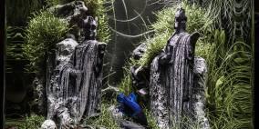 Die Steinkönige am Anduin - Flowgrow Aquascape/Aquarien-Datenbank