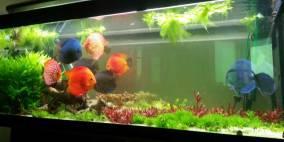 Diskus for life - Flowgrow Aquascape/Aquarien-Datenbank