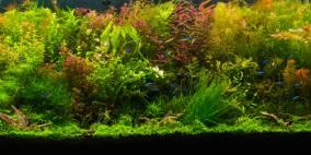 DJNoob´s 375 Liter - Flowgrow Aquascape/Aquarien-Datenbank