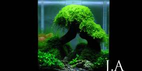 Do You Remember - Flowgrow Aquascape/Aquarien-Datenbank
