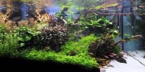 Dragon Triangle - Flowgrow Aquascape/Aquarien-Datenbank