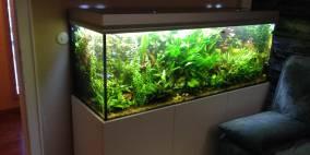 Dschungel-450 - Flowgrow Aquascape/Aquarien-Datenbank