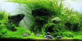 Ein bisschen Iwagumi - Flowgrow Aquascape/Aquarien-Datenbank