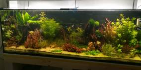 Eine etwas größere Herausforderung... - Flowgrow Aquascape/Aquarien-Datenbank