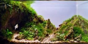 Eine Hand voll Stein - Flowgrow Aquascape/Aquarien-Datenbank