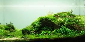 Elements - Flowgrow Aquascape/Aquarien-Datenbank