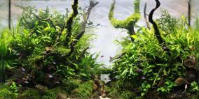Elvis P.   125ltr. - Flowgrow Aquascape/Aquarien-Datenbank