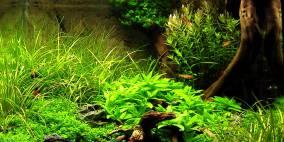 Eternal Unity - Flowgrow Aquascape/Aquarien-Datenbank