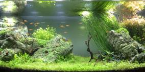 Eternity and a Day - Flowgrow Aquascape/Aquarien-Datenbank