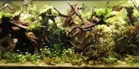 Ev's Perlhühnerstall - Flowgrow Aquascape/Aquarien-Datenbank