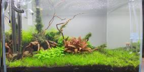 Fächer Wald - Flowgrow Aquascape/Aquarien-Datenbank