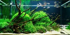 Far East - Flowgrow Aquascape/Aquarien-Datenbank